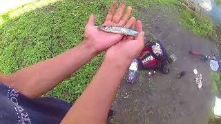 Рыбалка в станице родниковская краснодарского края