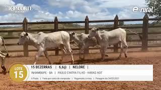 15 BEZERRAS NELORE