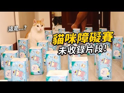 志銘與狸貓的貓咪障礙賽未收錄片段 好多貓咪真的可愛真的超香!