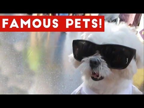 Funniest Instagram Pets & Viral Animal Compilation 2017 | Funny Pet Videos