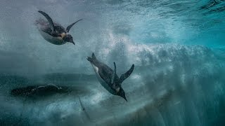 Antartica | Chapter 3: the great dive | ARTE 360°