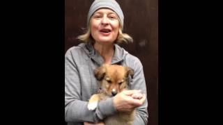 THE MOST ADORABLE PUPPY : GOLDIE (with Julia Fordham)