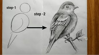 how to draw a easy bird step by step with pencil sketch,bird drawing tutorial veri easy step,