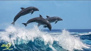 Relaxing Harp Music: Calm, Soothing, Soft, Ocean Nature Sounds   Instrumental Background Music ★56