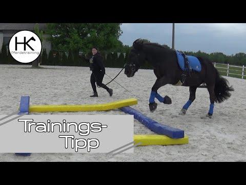 So wird dein Pferd durch Stangentraining zum Bodybuilder | Muskelaufbau #4 | Merlin Nero