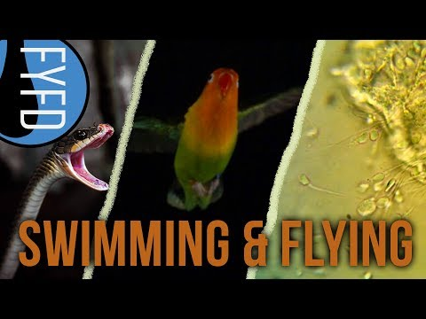 Learn how snakes catch prey underwater, what birds do when flying through gusts, and how sperm swim.