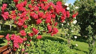 preview picture of video 'Ocenjevanje urejenosti hiš in vrtov 2013 v občini Preddvor'
