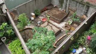 preview picture of video 'Creating a new garden in Taipei City (from a garbage dump) - late 2010'