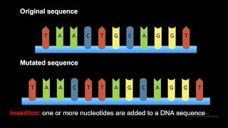 DNA Gene Mutations (Frameshift, Point, Insertion, Deletion, and Substitution)