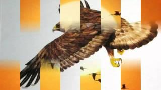 ~fly robin fly!~