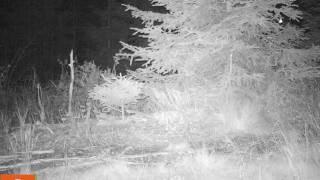 LfU PM 34 vom 04 08 2017 Quelle Nationalparkverwaltung Bayerischer Wald