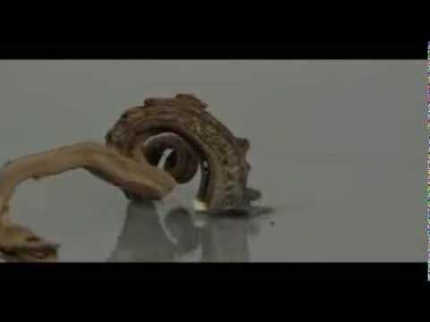 سبحان الله حجر يتحول إلى شكل ثعبان ميت عندما تلمسه النار