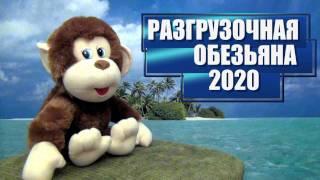 Разгрузочная Обезьяна 2020