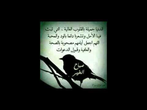 الشيخ محمد سيد حاج التواضع