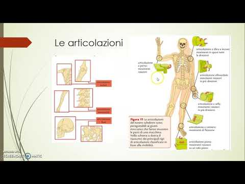Artrosi delle articolazioni dellanca di 1-2 gradi