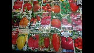 Лучшие сорта томатов для выращивания видео