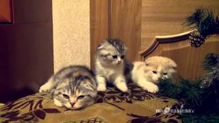 Contagious Yawning / Заразительное зевание - Video Youtube