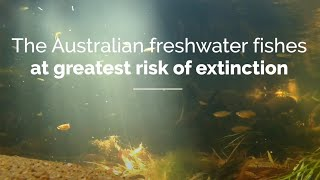 The Australian freshwater fishes at greatest risk of extinction