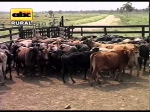 Control de parásitos en bovinos