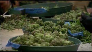 Chronicle Cannabis