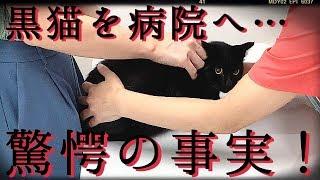 【驚愕】保護した黒猫を病院へ連れて行ったら…