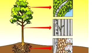 [Sinh 11]  Vận chuyển các chất trong cây