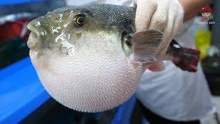 Korean street food – Puffer fish blowfish eat carrot! toxic cleaning