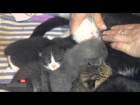 Кошка кормит чужого котёнка
