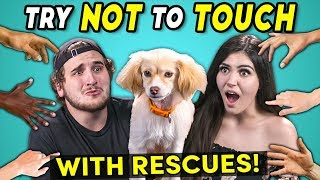 Try Not To Touch Challenge (ft. Rescue Animals! | Best Friends)