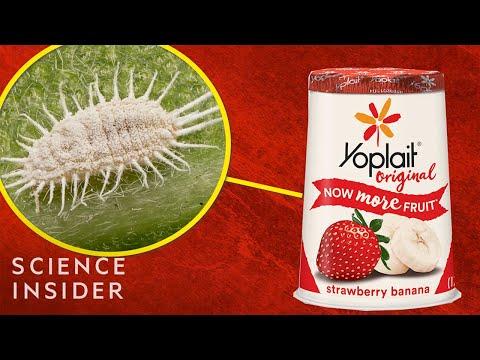 mp4 Nutrition Facts Yoplait Strawberry Yogurt, download Nutrition Facts Yoplait Strawberry Yogurt video klip Nutrition Facts Yoplait Strawberry Yogurt