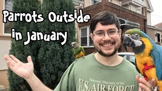 Parrots Outside on Warm January Day!