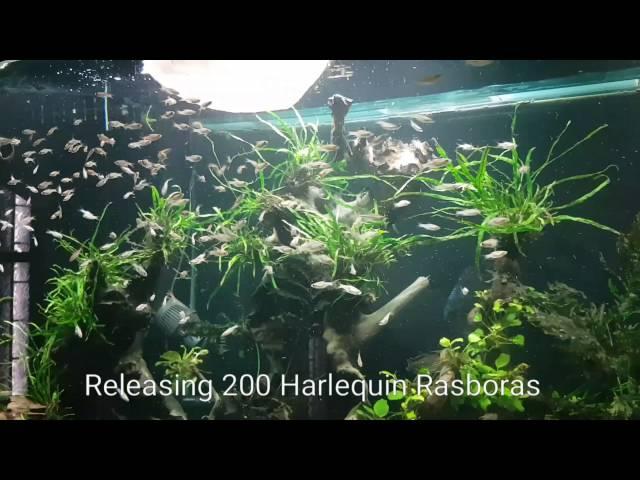 Adding 300 fish! 600 gallon planted discus tank