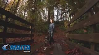 Maita Toyota - Fall Inspection (Draft)