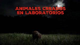 Animales Espeluznantes Creados En Laboratorios.