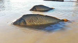 Death In The Rio Grande