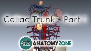 Celiac Artery/Trunk - Part 1 - Anatomy Tutorial