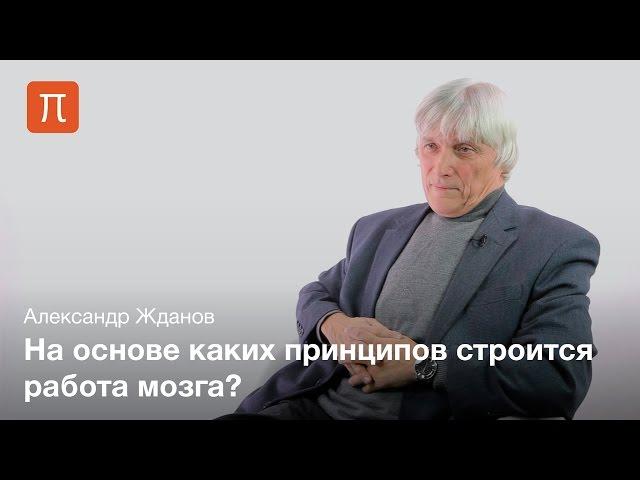 Алгоритм работы мозга - Александр Жданов