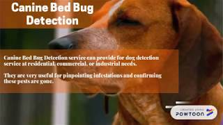 4 Different Types of Bedbugs Treatment