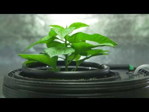 GrowRilla Oxy Ring sistema di coltivazione idroponica