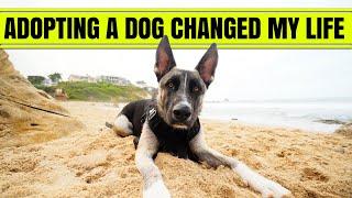 ADOPTING A DOG CHANGED MY LIFE