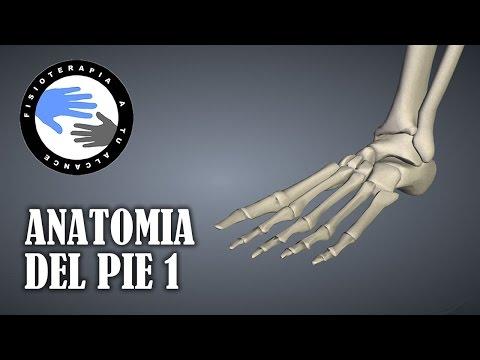 Fármaco para el tratamiento de la osteoartritis