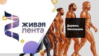 Живая лента | Выпуск 32 | Дарвин. Эволюция