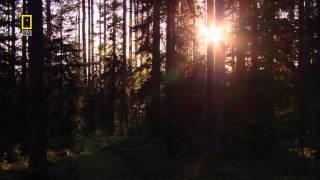 Смотреть онлайн Фильм о природе России: Урал