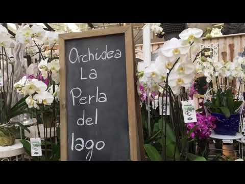 """La """"perla del lago"""" si presenta a Varese Orchidea"""