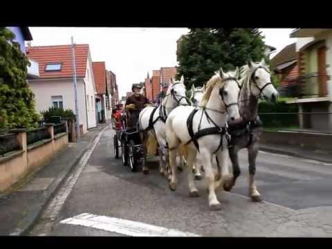 Commander dans Internet le stimulant de cheval