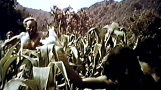 Planet of the Apes (1968) Video