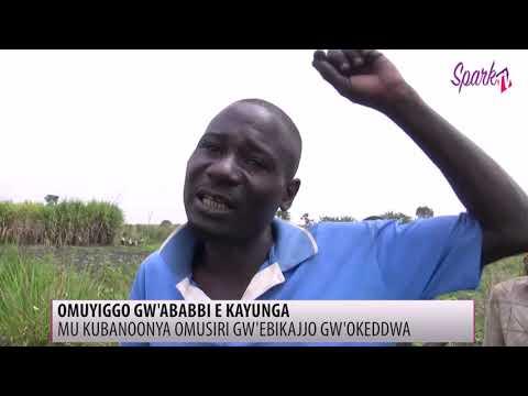 OMUYIGO GW'ABABBI E KAYUNGA: Mu kubanoonya omusiri gw'ebikajjo gw'okeddwa