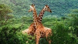 Животные Африки. Дикий мир. Большое Сафари. Документальный фильм.