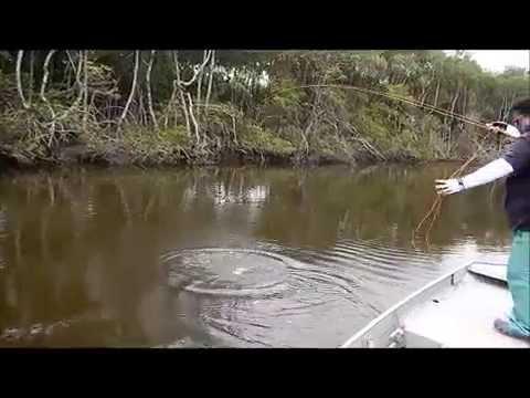 pescaria de robalos no rio una