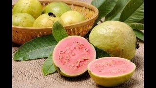 अमरूद खाने के फायदे - Benefits Of Guava - Health Care Tips In Hindi - Download this Video in MP3, M4A, WEBM, MP4, 3GP